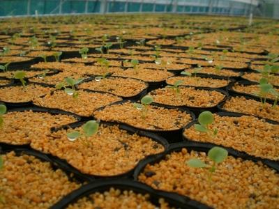 190625marin_seedlings